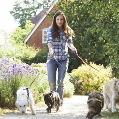 Lady Dog Walker 860x540
