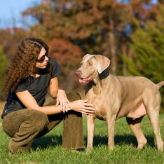 North Shore Dog Training