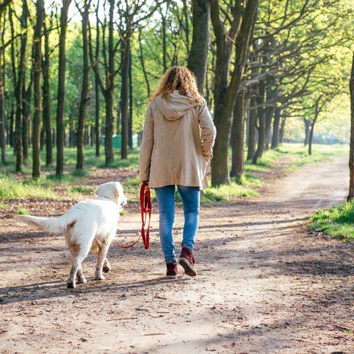 East Coast Dog Walking